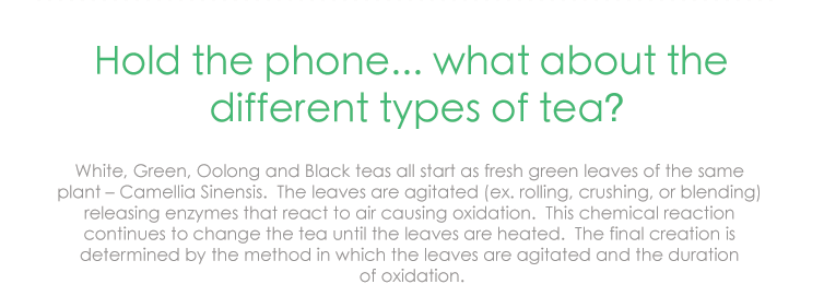Hold the phone... what about the different types of tea? White, Green, Oolong and Black teas all start as fresh green leaves of the same plant – Camellia Sinensis. The leaves are agitated (ex. rolling, crushing, or blending) releasing enzymes that react to air causing oxidation. This chemical reaction continues to change the tea until the leaves are heated. The final creation is determined by the method in which the leaves are agitated and the duration of oxidation.